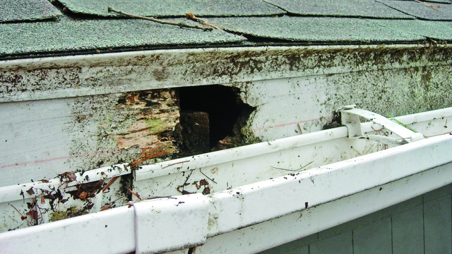 5 Ways Blocked Gutters Can Damage Your Home Domestic Air